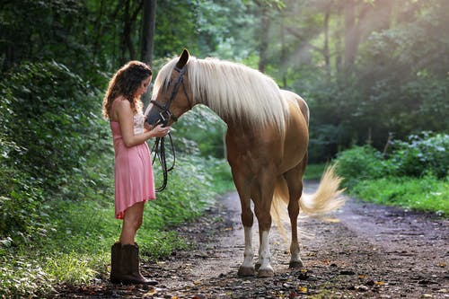 Horse Grooming Tips